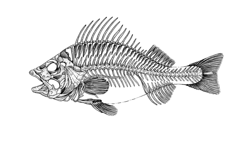 fish-skeleton